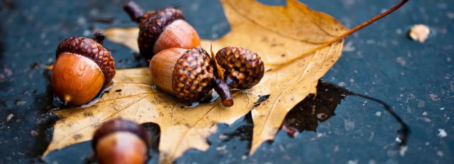 «Осень золотая в